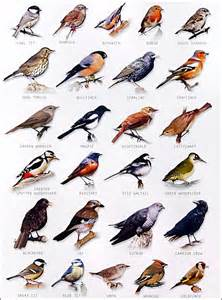 garden bird chart watch the birds