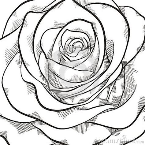 imagenes en negro y rosa fondo con la rosa blanco y negro hermosa imagen de archivo