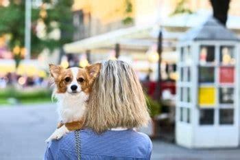 wie kann schnell eine wohnung finden wohnungssuche mit hund
