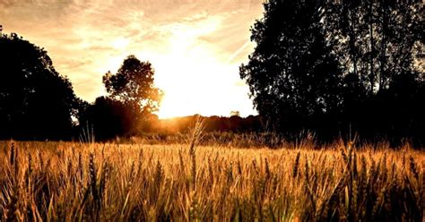 country summer photography wallpapers gallery