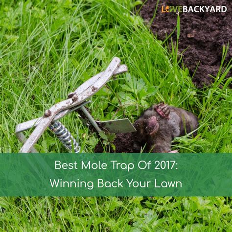 backyard troline reviews best troline reviews for your backyard 28 images the 5