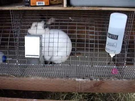 backyard rabbitry backyard rabbitry raising meat rabbits youtube
