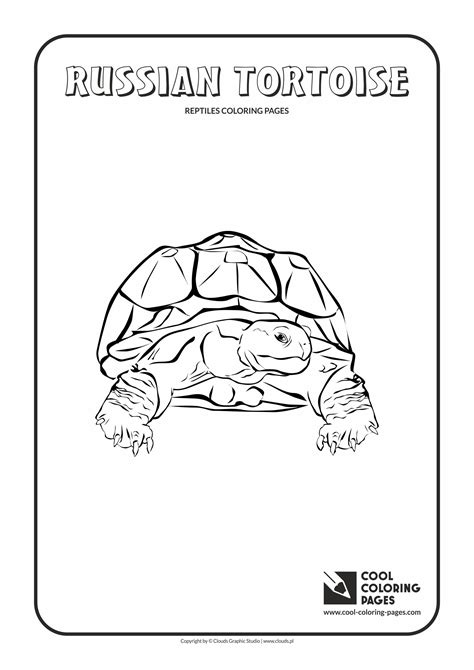 anole lizard coloring page anole coloring pages coloring pages