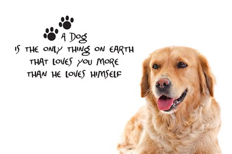 puppy quotes sayings new dogs quotes part one weneedfun