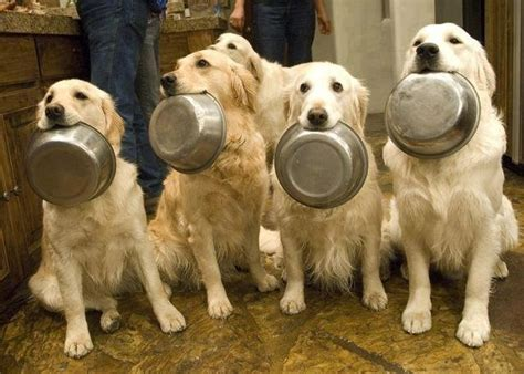 what to feed dogs what to feed your when you re out of food rover