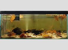 Biotoecus opercularis — Seriously Fish Just Keep Swimming