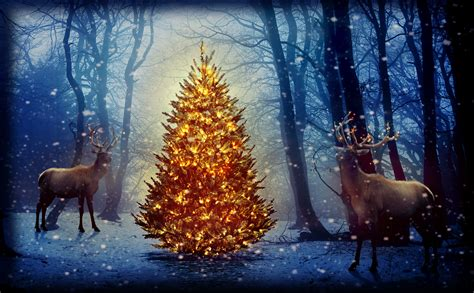 new year animals wallpapers photo deer nature winter snowflakes new year