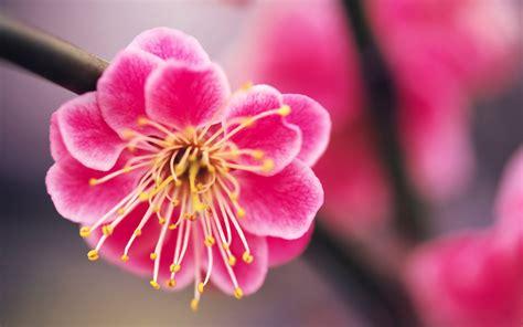 imagenes de rosas maravillosas maravillosas im 225 genes de flores im 225 genes taringa