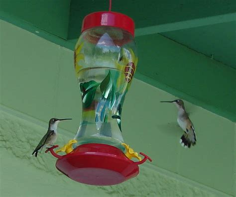 about hummingbirds 187 about hummingbirds