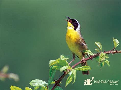 wild birds unlimited how do birds migrate