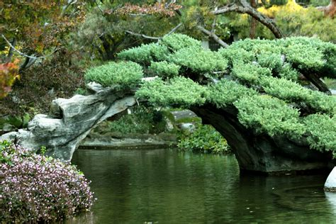 Los Angeles Zoo Botanical Gardens Japanese Garden Flickr Photo