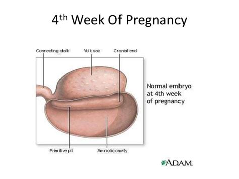 two weeks after the official opening of the little mermaidsection pregnancy chances with withdrawal pregnancy after 2 weeks