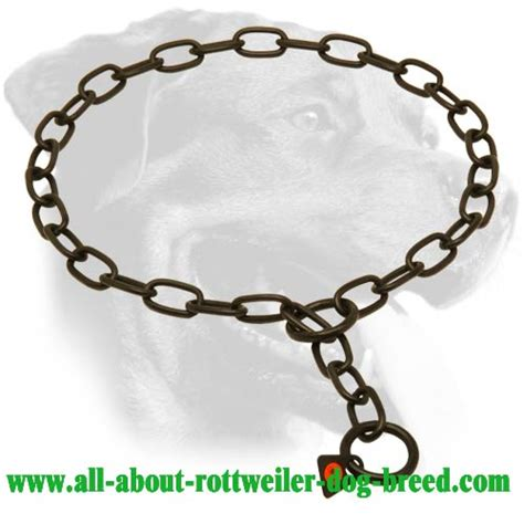 rottweiler behaviour problems buy black stainless steel rottweiler choke collar behavior