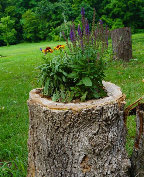 Decorating A Tree Stump by 14 Interesting Ideas How To Decorate Your Garden With Tree