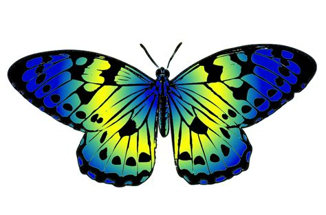 clipart butterfly butterfly clipart
