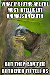 Make Grilled Cheese In Toaster What If Sloths Are The Most Intelligent Animals On Earth