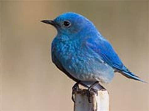what do blue bird eggs look like foto bugil bokep 2017