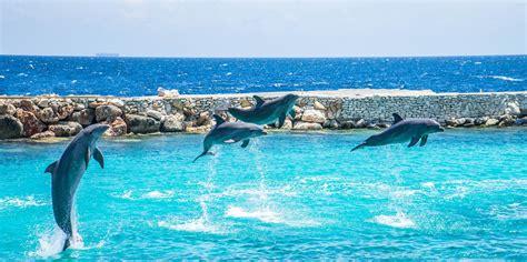imagenes para fondo de pantalla delfines fondo de pantalla de delfines saltos piruetas cet 225 ceos