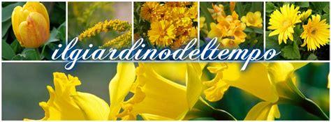 fiore giallo significato significato fiori gialli gpsreviewspot