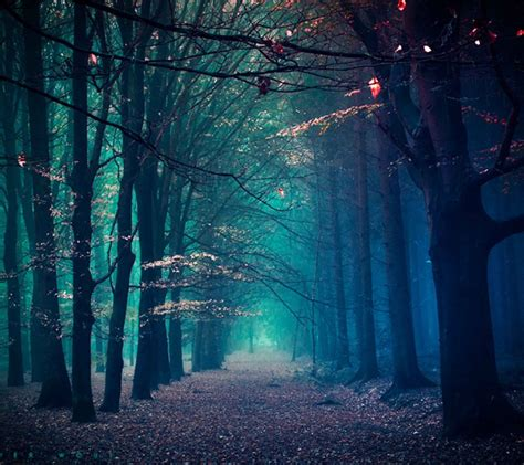 creepy forest path desktop wallpaper