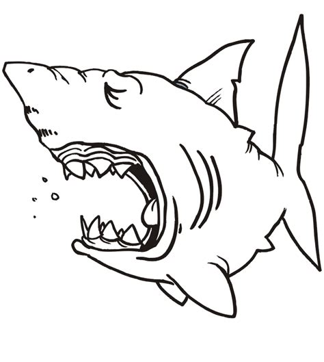shark face coloring page shark images free cliparts co