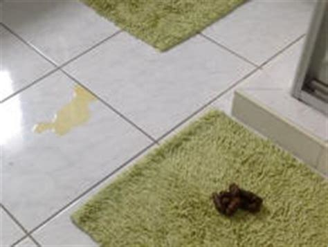 dogs urinating in the house when house trained adult dog suddenly started peeing in the house