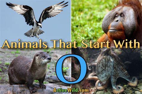 animals that start with u list of amazing animals animals that start with o list of amazing animals