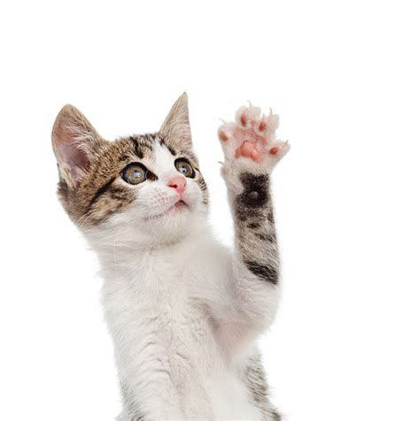 what to do if a cat scratches you wound care society