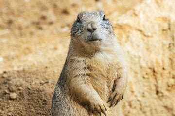 groundhog day sinopsis groundhog day channel one news