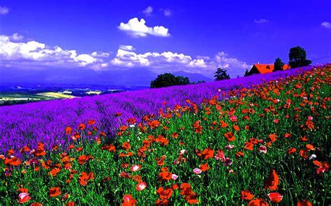 imagenes bonitas de paisajes paisajes de flores de flores flores de colores