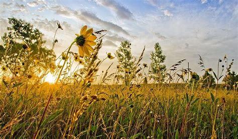 de smet laura ingalls wilder homestead laura ingalls wilder homestead de smet sd laura
