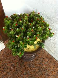 Feng Shui Plant For Harmony And Positive Energy In The Feng Shui Colors For Living Room