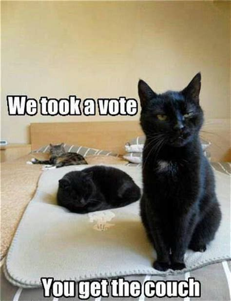 Funny Black Cat Memes - black cats with funny captions the vote is in captions 3