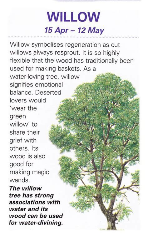 meaning of trees celtic tree astrology willow apr 15 may 12 witches