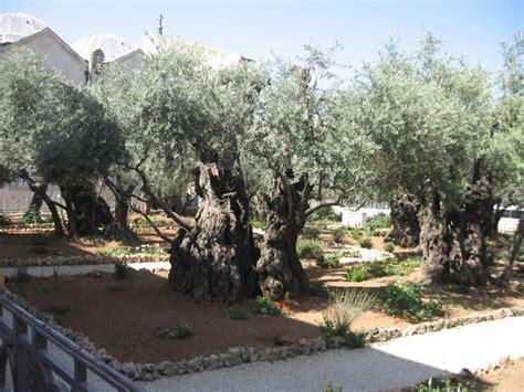Olive Garden Montana by Mount Of Olives Jerusalem 101