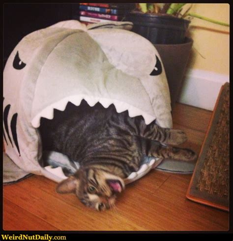 cat shark bed funny pictures weirdnutdaily that cat bed doesn t look very relaxing