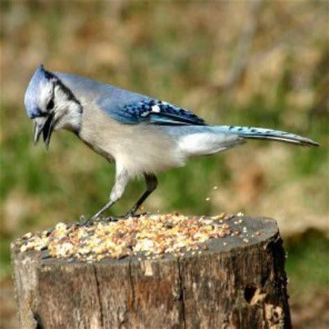 saving money on wild birdseed thriftyfun