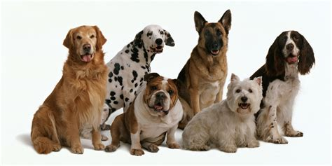 which breed are you quiz which breed of are you