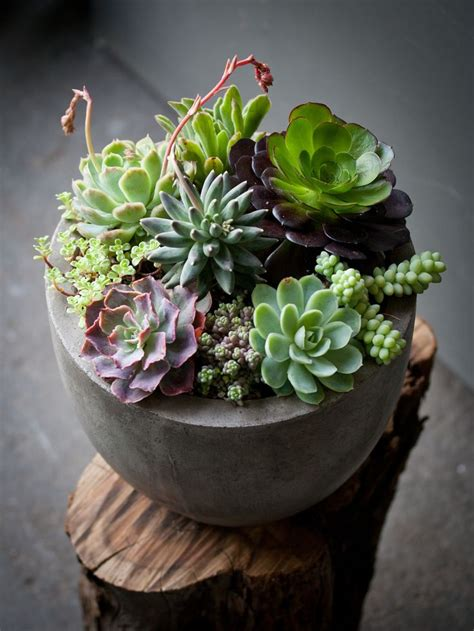 Indoor Succulent Planter by Best 25 Indoor Succulent Garden Ideas On