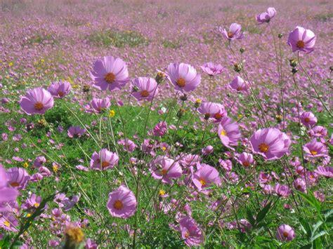 imagenes flores silvestres fotos de flores silvestres y sus nombres
