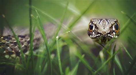snake   grass    macro animals