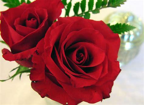 comment offrir une rose rouge seule ou en bouquet la