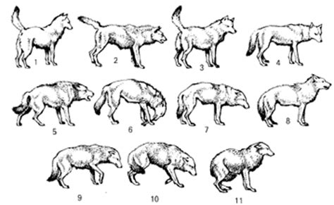 paws first choice: canine body language