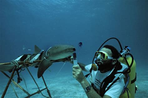 learn about being a marine biologist