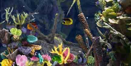 Lu Buat Aquarium aquarium fish