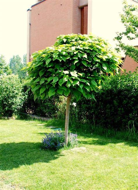 piante da giardino antizanzare piante antizanzare giardinaggio