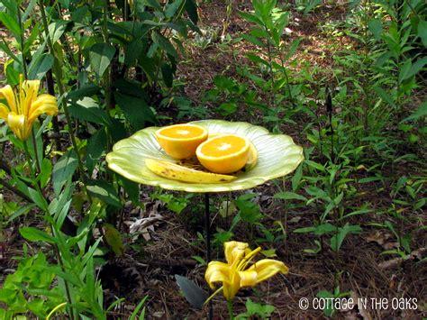 attracting butterflies and hummingbirds to your backyard attracting butterflies hummingbirds to your garden
