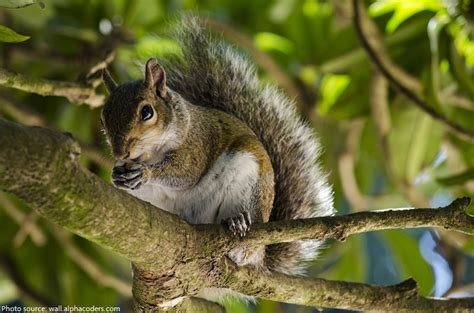 interesting facts about squirrels just fun facts