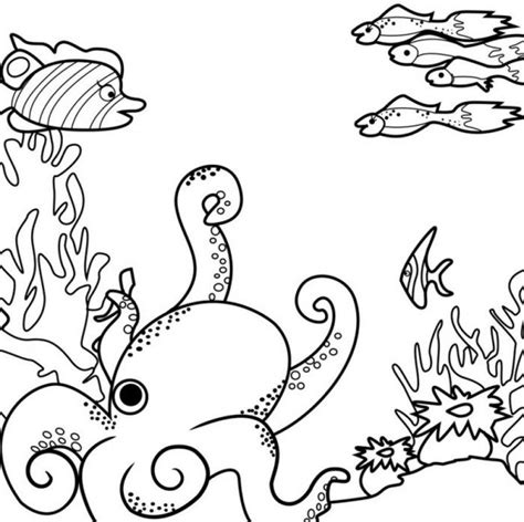 free printable ocean diorama free coloring pages of ocean ecosystem