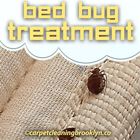 bed bug treatments bed bug treatment